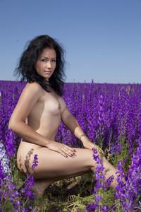 Maliko - Lavender Dreams  k6rpbxbzvg.jpg